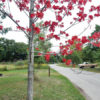 red leaves tree shade